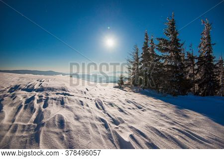 Beautiful Slender Fir Trees Grow Among Snow-covered Snowdrifts On A Hillside Against A Background Of
