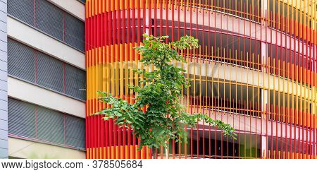 Stylish Scaffolds Of Red And Orange Colours Cover White Commercial City Building With Green Maple Tr
