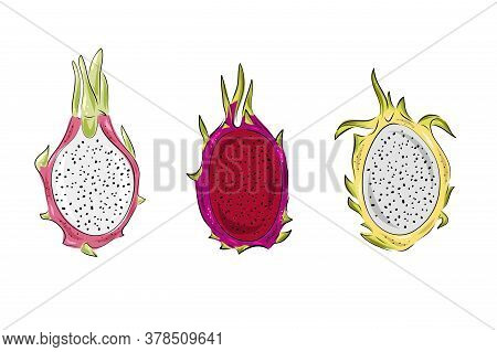 Dragon Fruit Vector Graphics Set. Hand Drawn Tropical Food Illustration. Pink, Red And Yellow Summer