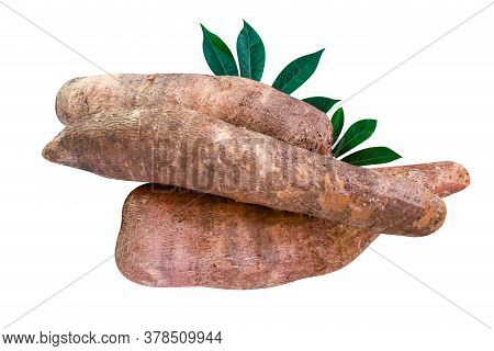 Cassava Tubers Fresh On Leaves Isolated White, Pile Cassava Manioc In Top View, Yucca Root For Flour
