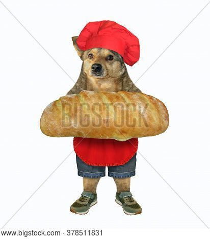 The Beige Dog Baker In A Red Chef Hat And Apron Is Holding A Big Loaf Of  White Bread. White Backgro