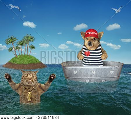 The Beige Dog Lifeguard In A Red Cap Is Drifting In A Metal Oval Wash Tub To Help A Drowning Cat In
