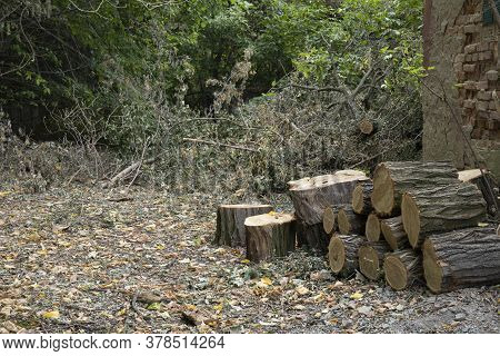 Chopped Tree Trunks For Firewood Outdoor Near House