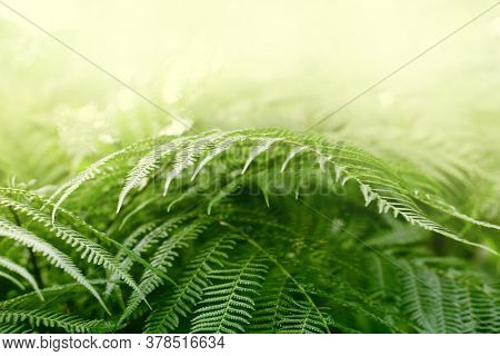 Fern tropical plants leaf. Nature green background.