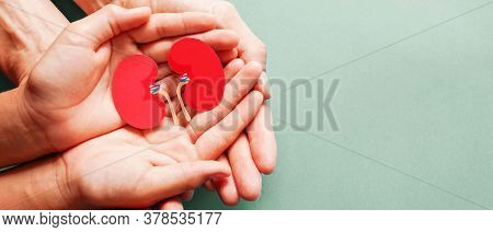Kidney in hand for philanthropy concept - woman holding Kidney on hands for valentines day or donate help give love warmth take care.