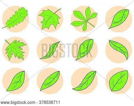 Green Leaves Icon Set. Maple, Oak And Chestnut Leaf Contour In A Circle Isolated On White Background