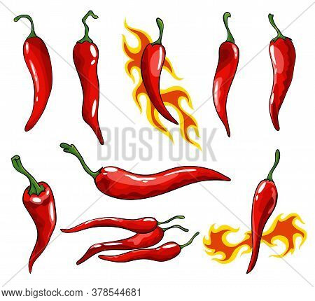 Collection Of Hand Drawn Chili Peppers. Super Hot Red Chilli Peppers. Red Isolated Mexican Peppers O