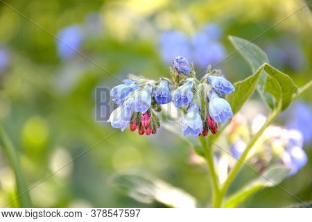 Beautiful Blue Inflorescences On A Blurry Background.