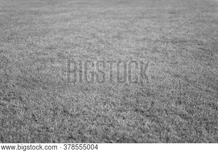 Green Grass Background. Grass Lawn Texture. Soccer Or Golf Grass Field. Grass Land. Grassy Turf. Spo