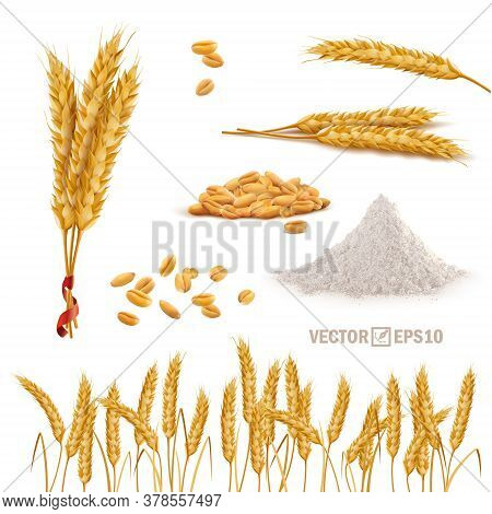 3d Vector Realistic Wheat Set, A Bunch Of Ears, Falling Grains, A Slide Of Flour, A Field Of Ears