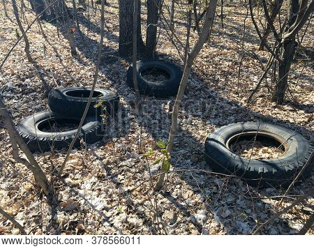 Dirty Old Rubber Tires In Forest. Illegal Garbage Disposal. Problem Of Ecology And Environmental Pol