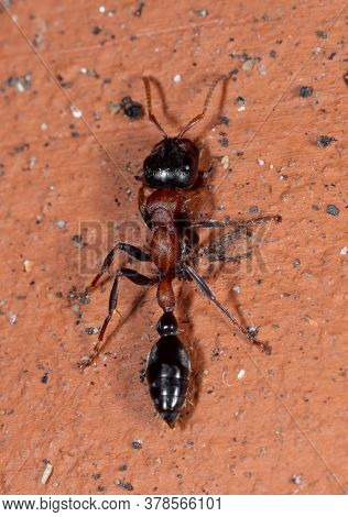 Macro Photography Of Two Tone Ant On Brick Wall