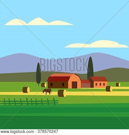 Rural Farm Landscape Field Country House, Cows. Summer Hills Sunset Farmland. Vector Illustration Ve