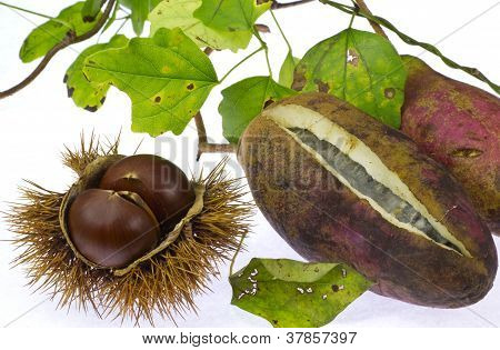 Akebi And Chestnut