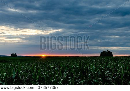Sunset After Rain Over Crop Field. Panoramic Sunset Over A Ripening Corn Field