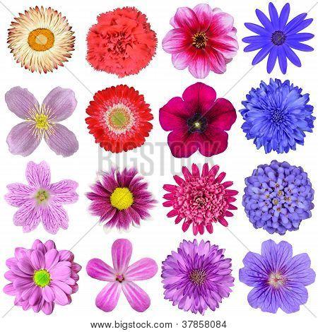 Große Auswahl an bunten Blumen, Isolated On White Background
