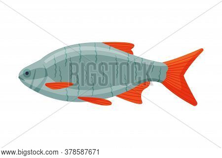 Roachfish Freshwater Fish, Fresh Aquatic Fish Species Cartoon Vector Illustration