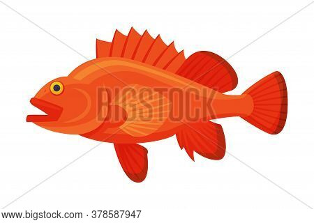 Sea Perch Fish, Fresh Aquatic Sea Fish Species Cartoon Vector Illustration