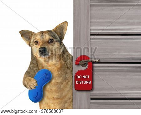 The Beige Dog With A Blue Sleep Mask Closes The Door Of His Hotel Room.  A Red Sign With Text Do Not