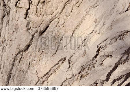 Close-up Tree Bark Texture. Wood Whitewashed To Protect Against Pests.