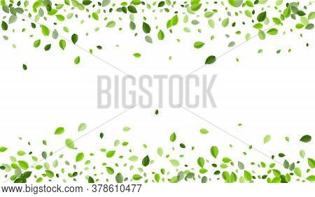 Mint Foliage Organic Vector Branch. Realistic Leaves Background. Green Leaf Wind Illustration. Green