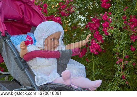 Baby In A Stroller On A Background Of Roses, Baby In A White Dress In A Stroller Near The Curling Ro