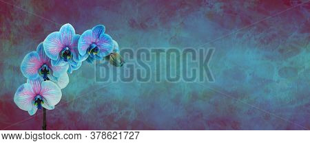 Beautiful Rare Blue Orchid Flowers Message  Banner - Blue And Pink Orchid Flower Heads On A Rustic S