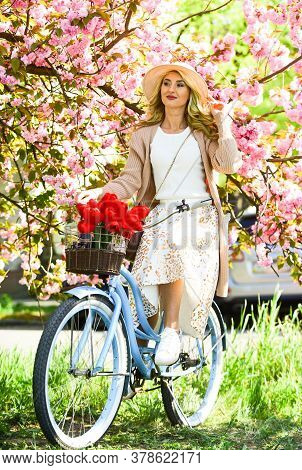 Woman Ride Vintage Bicycle. Romantic Girl And Sakura Blossom. Spring Season. Cherry Tree Blooming. S