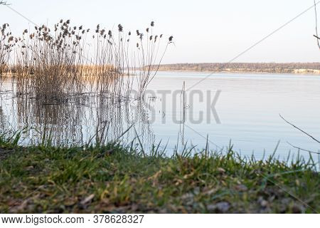 Beautiful Landscape Of Spring Nature: Lake, Trees And Reeds. Reflection Of Reeds In The Water.