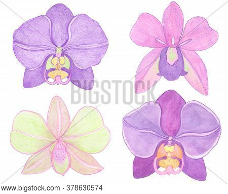 Orchid Phalaenopsis Set Watercolor Illustration. Beautifull Exotic Flower In A Full Bloom With Green