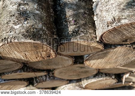 Birch Logs For Harvesting Firewood And A Fireplace Insert, Stacked Upside Down, Visible Sections (sa