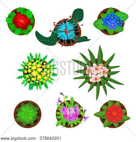 Set Of Flower In Pots Isolated On White Background. Plants Icon Collection Top View With Pets Flower