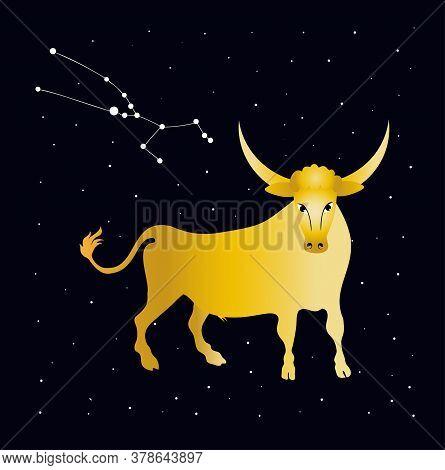 Golden Bull And Starry Sky. Constellation Taurus. Zodiac.