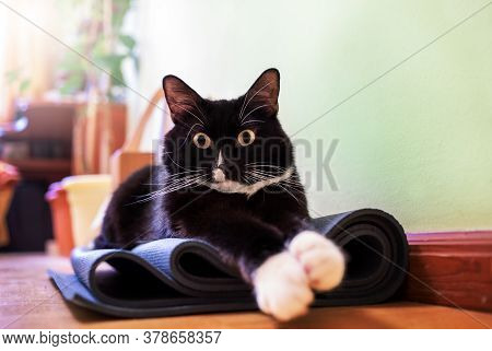 Black And White Cat Is Sitting On Folded Yoga Mat In Room And Looking At Camera In Surprise. Favorit