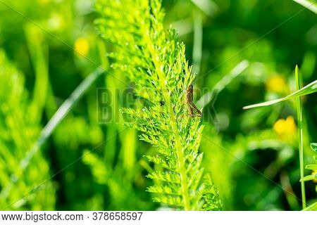 Green Grass In Bright Colors, Background Texture.