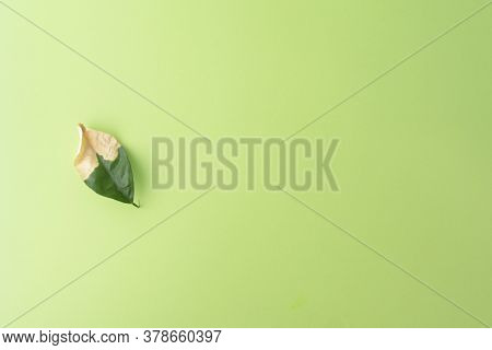 One Wilting Green Leaf On A Green Background. Autumn Concept