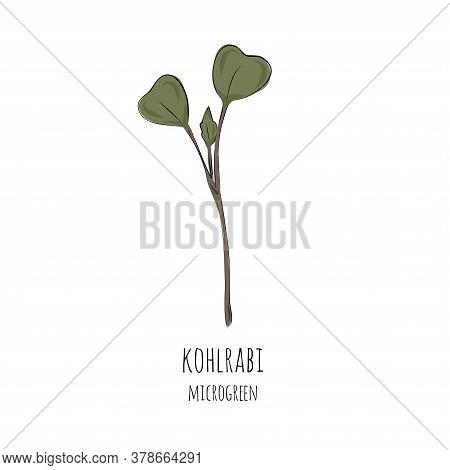Hand Drawn Kohlraby Micro Greens. Vector Illustration In Sketch Style Isolated On White Background.