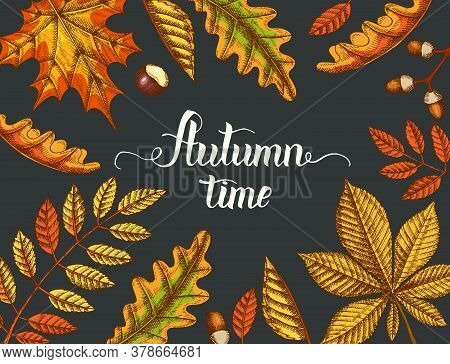 Autumn Background With Hand Drawn Leaves On White. Sketch. Hand Made Lettering