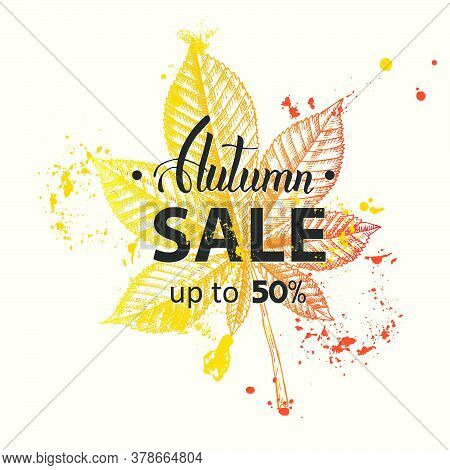 Vector Autumn Sale Banner. Up To 50%. Lettering. Sketch. Hand Drawn Doodle Chestnut. Engraving Illus