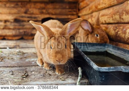 Brown Rabbit In Wooden Cage At The Farm