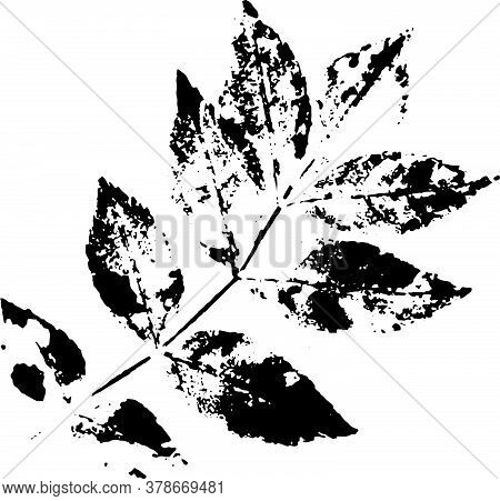 Leaf Brush. Black Ink Decal Twig With Petals. Suitable For Use As A Brush.