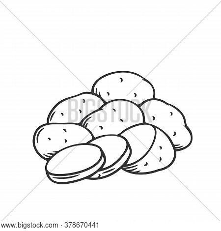 Bunch Of Potatoes. Raw Potato Whole Root Crops And Sliced Pieces Outline Vector Illustration.