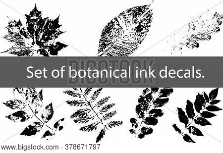 Set Of Botanical Ink Decals. Leaf Decals. Graphic Elements.