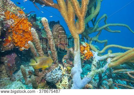 Caribbean Coral Reef Off Coast Of The Island Of Bonaire