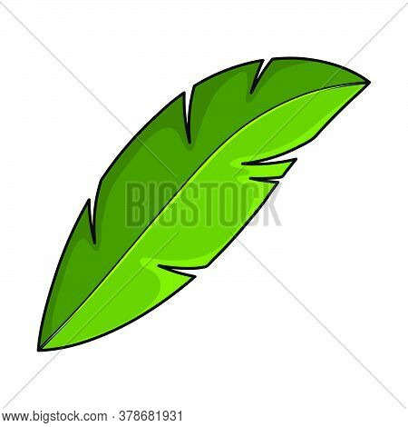 Coco Palm Foliage Isolated On White. Single Cartoon Exotic Frond. Part Of Tropical Palm Tree. Green