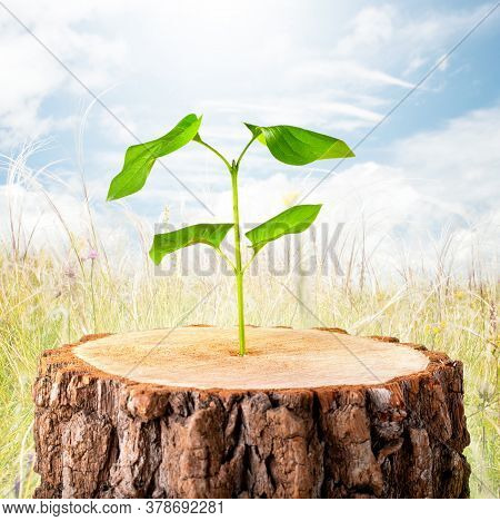 Ecology Concept. Business Development Symbolic. Green Plant-new Life.