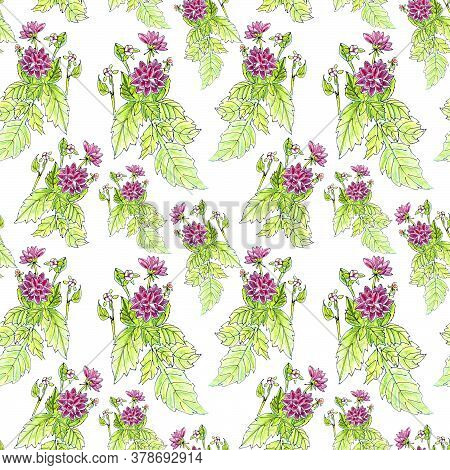 Seamless Pattern Of Flowers And Inflorescences Of Pink Dahlias On A White Background