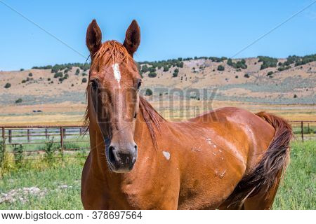 A Brown Horse With Beautiful Mane In Antelope Island State Park, Utah