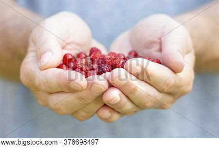 Red Berries Are On The Palms Of Mens Hands, Folded In The Shape Of A Heart