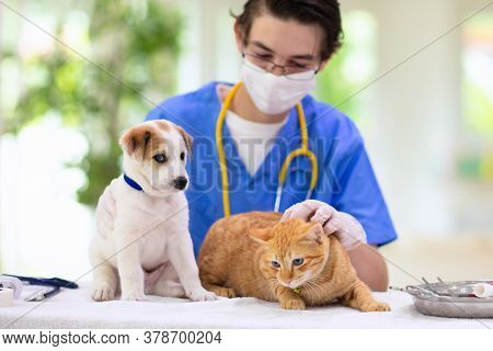 Vet Examining Dog And Cat. Puppy And Kitten At Veterinarian Doctor. Animal Clinic. Pet Check Up And